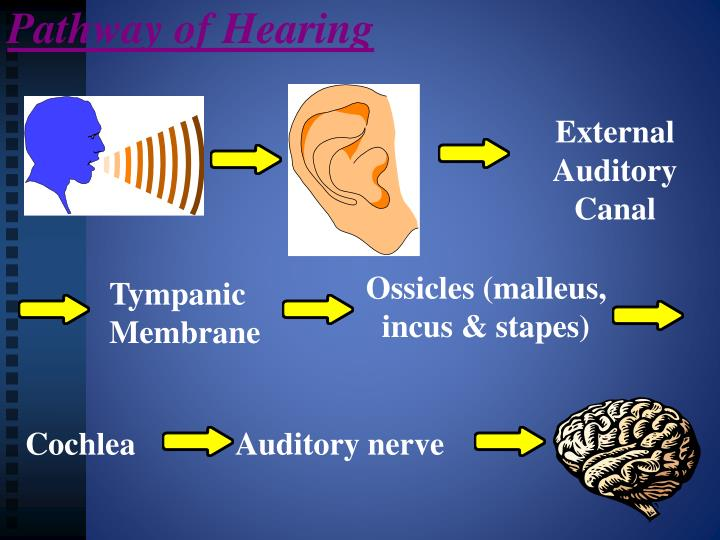 Pathway of Hearing