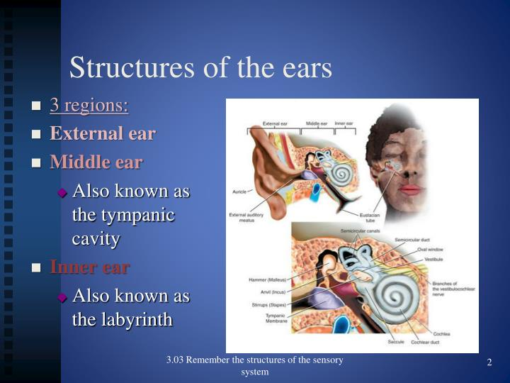 Structures of the ears