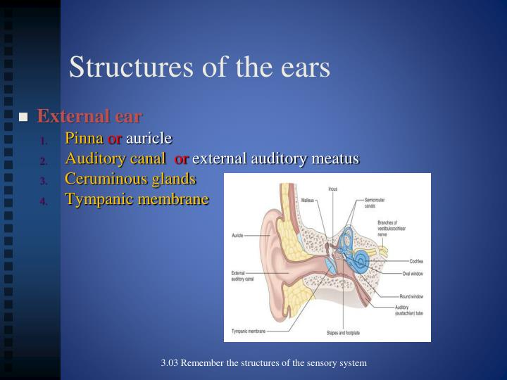 Structures of the ears1