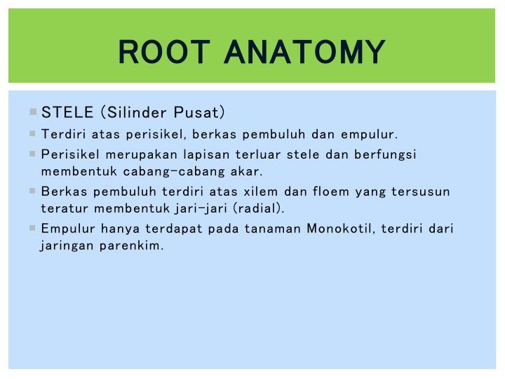Root anatomy