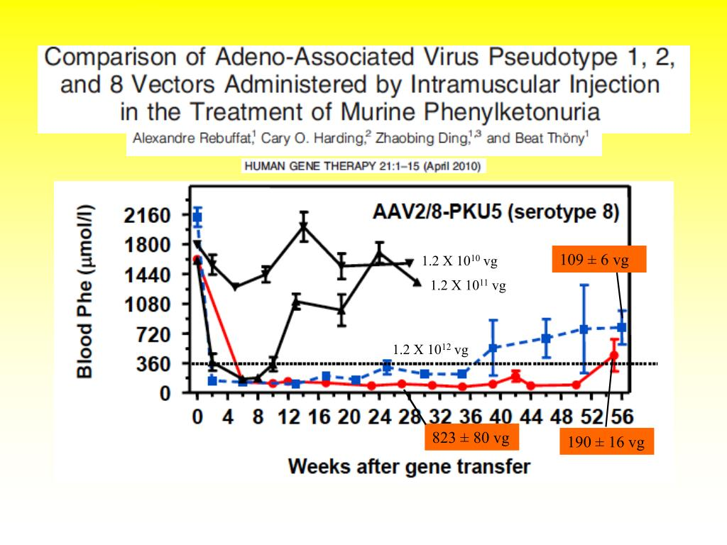 PPT - Advances in gene therapy for phenylketonuria (PKU