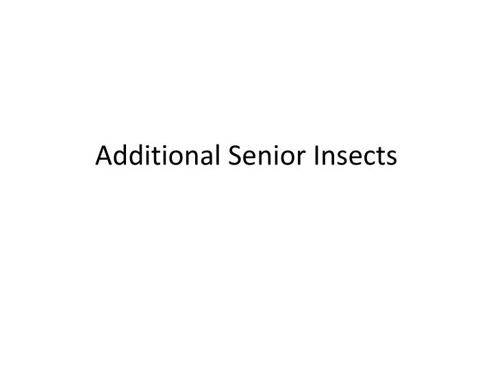 additional senior insects n.