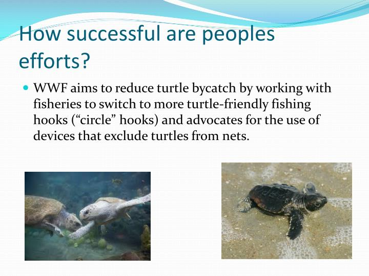 How successful are peoples efforts?