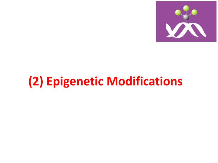 (2) Epigenetic Modifications
