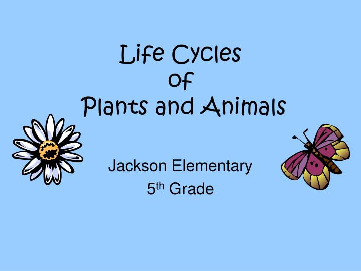 life cycles of plants and animals n.