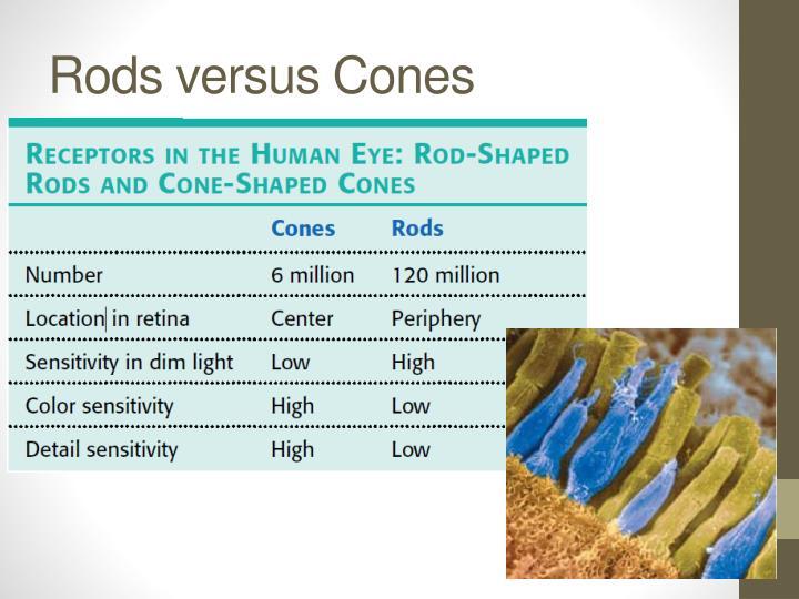 Rods versus Cones
