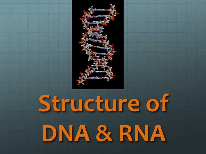 structure of dna rna n.