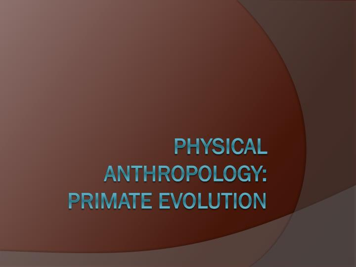 physical anthropology primate evolution n.