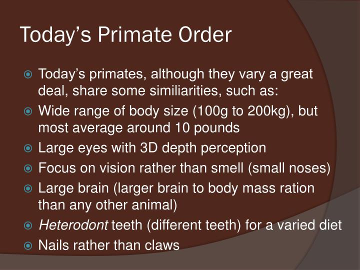 essay on primate evolution anthropology Anthropology essay   the study of modern non-human primate biology and behavior  paleoprimatology  the study of primate evolution.