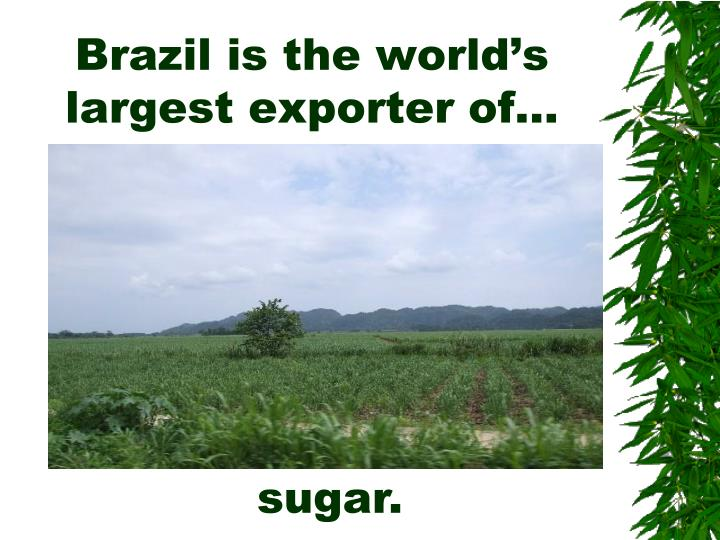 Brazil is the world's largest exporter of…