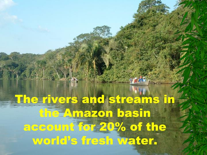 The rivers and streams in the Amazon basin account for 20% of the world's fresh water.