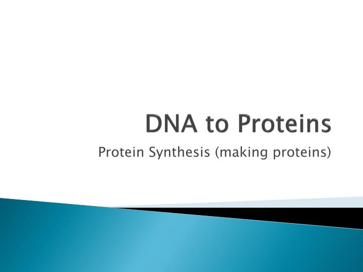 dna to proteins n.