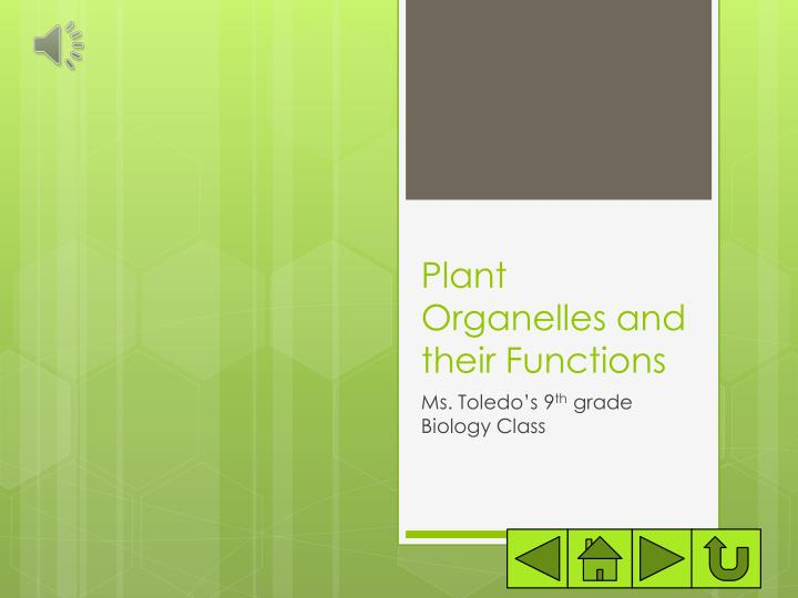 plant organelles and their functions n.