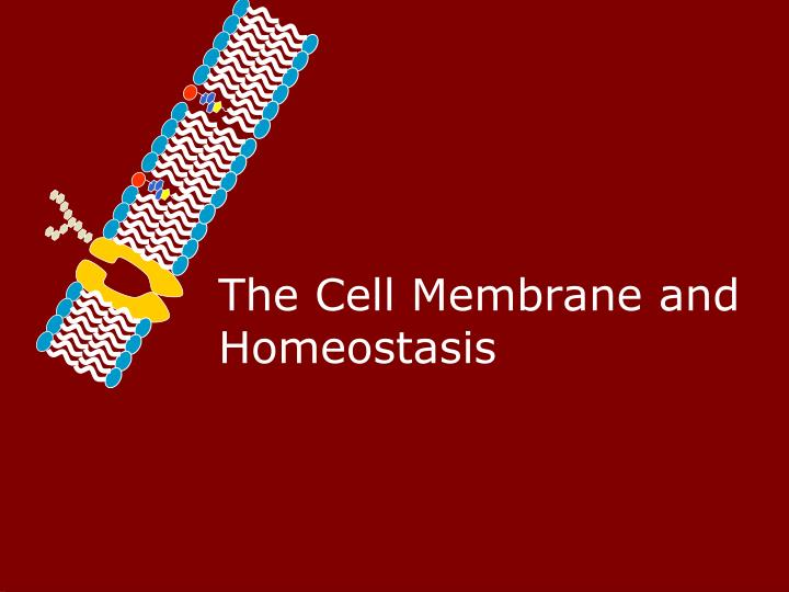 the cell membrane and homeostasis n.