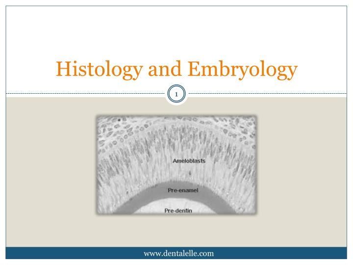 histology and embryology n.