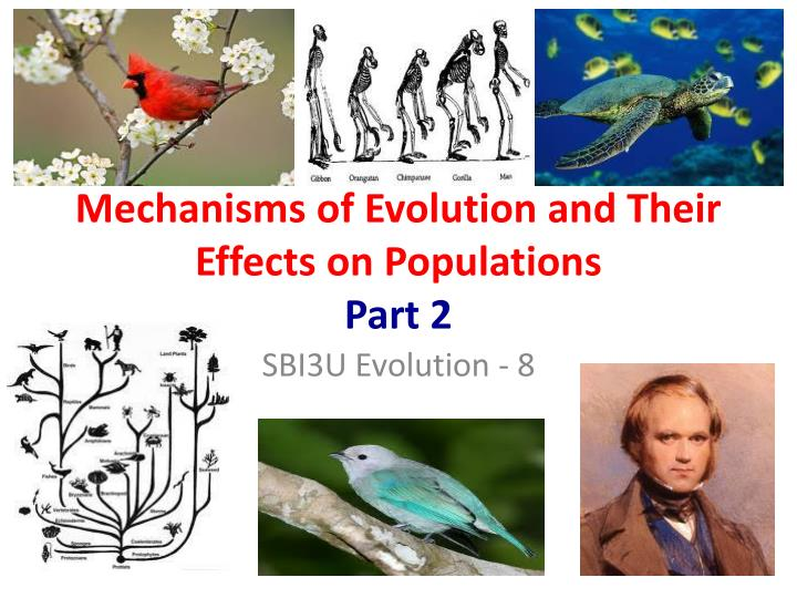 mechanisms of evolution and their effects on populations part 2 n.