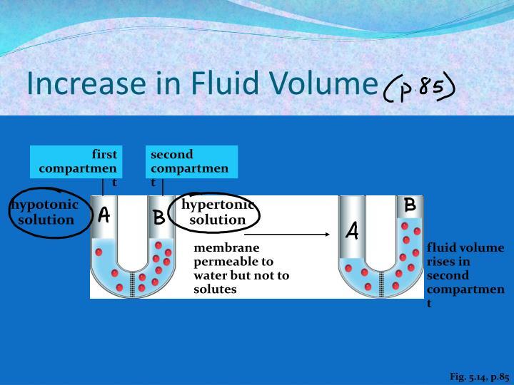 Increase in Fluid Volume
