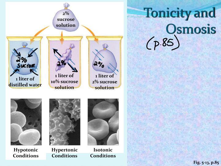 Tonicity and Osmosis