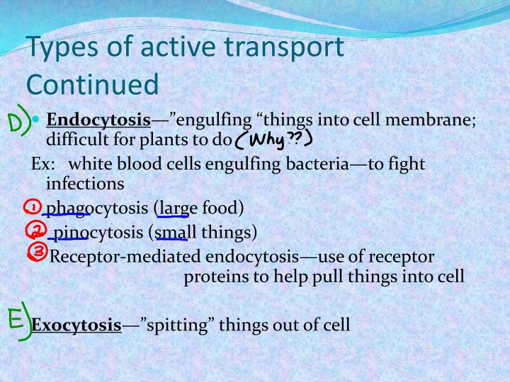 Types of active transport Continued