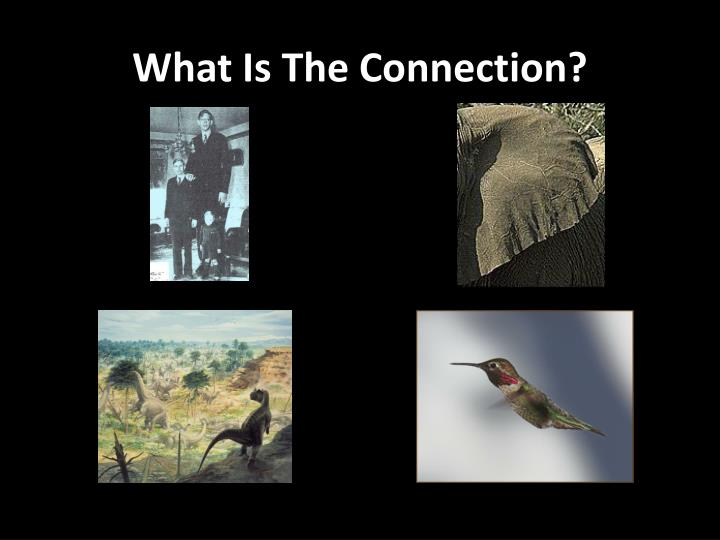 what is the connection n.