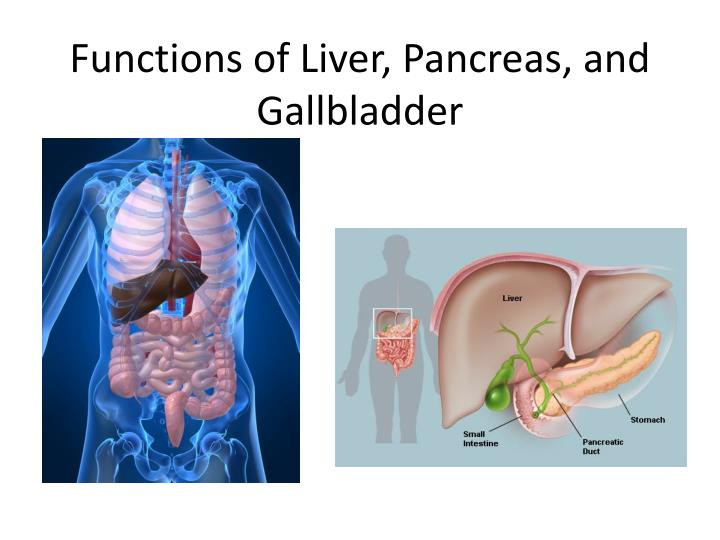 functions of liver pancreas and gallbladder n.