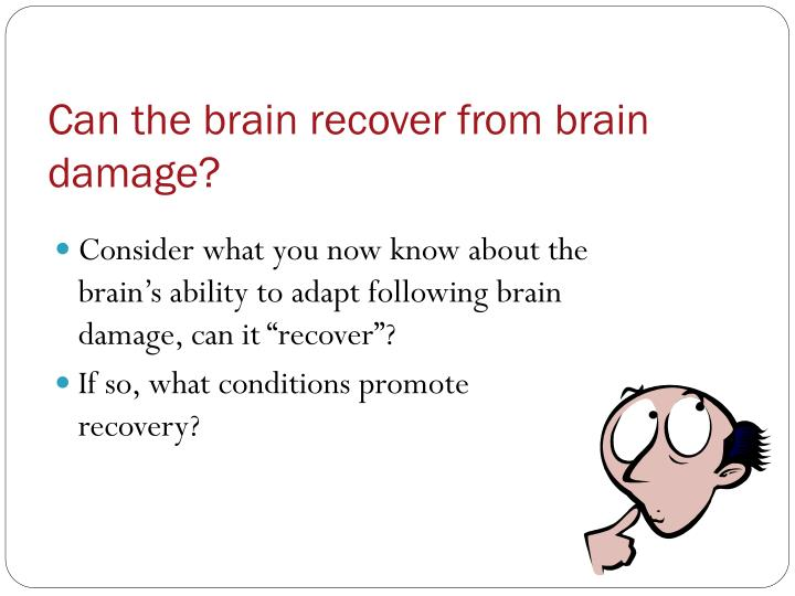 Can the brain recover from brain damage?