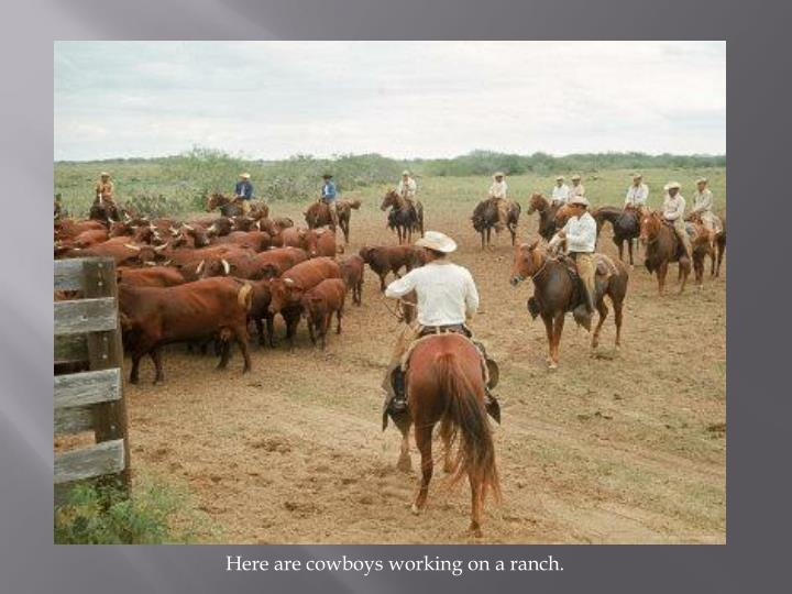 Here are cowboys working on a ranch.