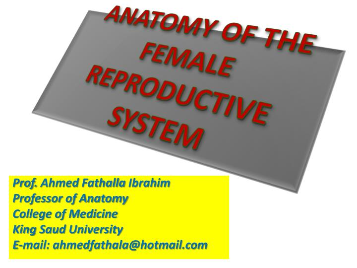 anatomy of the female reproductive system n.