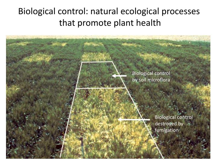 Biological control: natural ecological processes