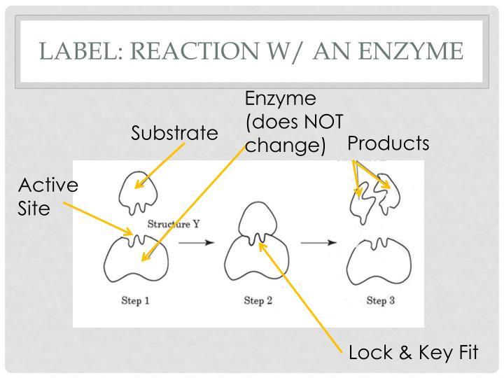 Label: Reaction w/ an enzyme