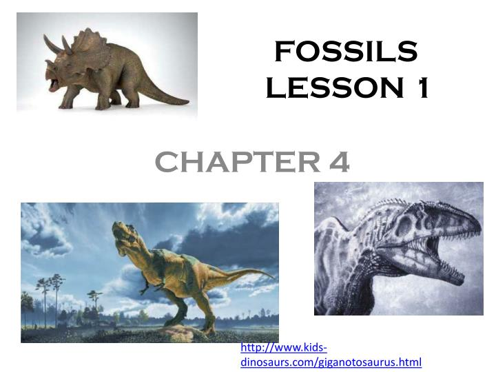 fossils lesson 1 n.