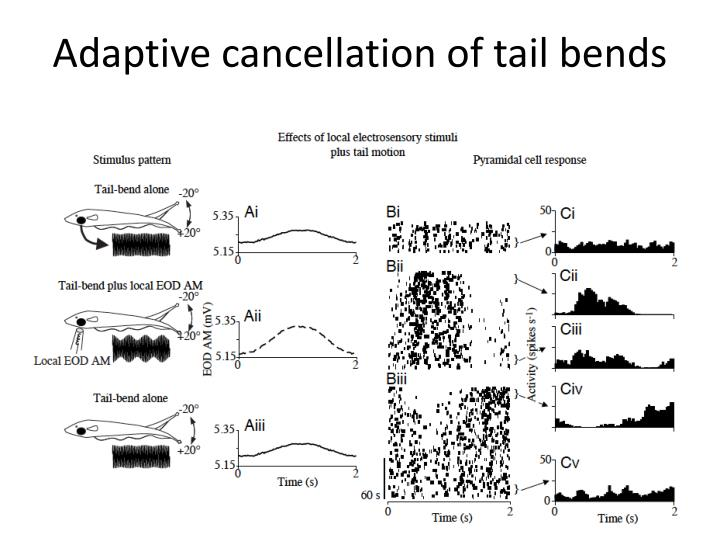 Adaptive cancellation of tail bends