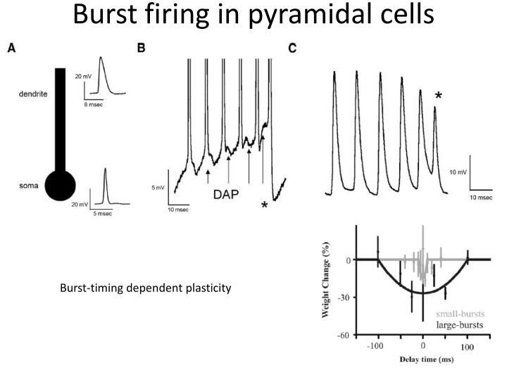 Burst firing in pyramidal cells