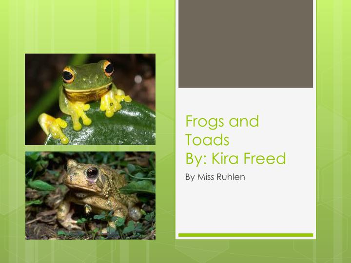 frogs and toads by kira freed n.