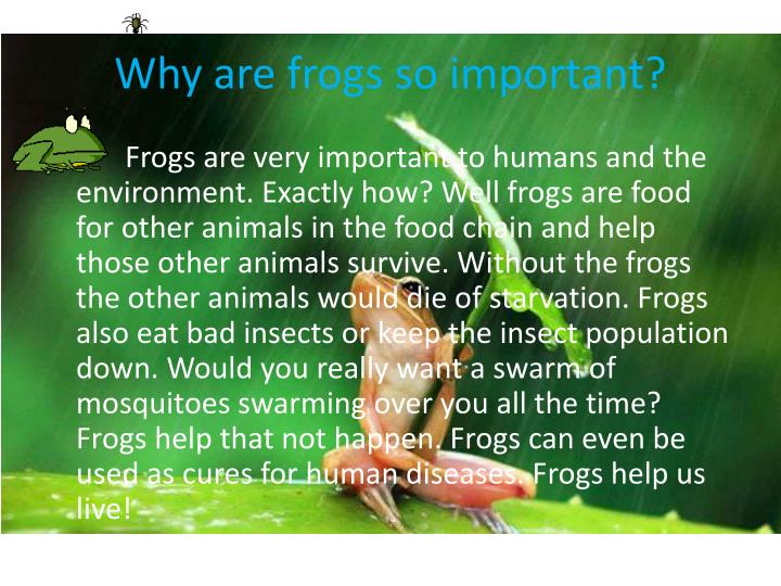 Why are frogs so important