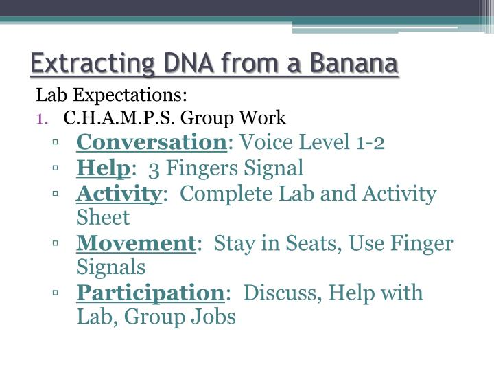 Extracting DNA from a Banana