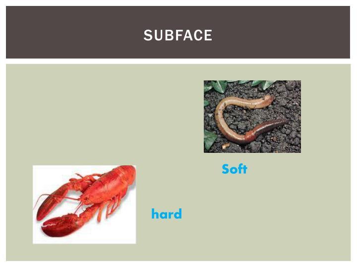 subface