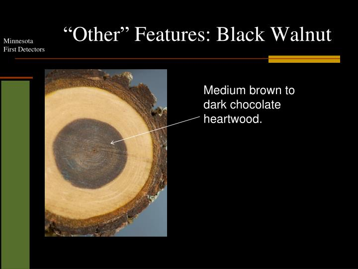 """Other"" Features: Black Walnut"