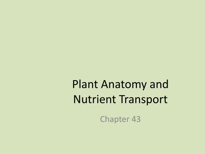 plant anatomy and nutrient transport n.