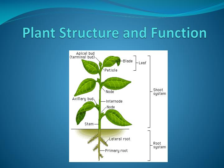 plant structure and function n.