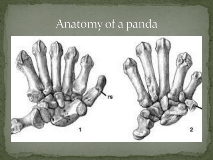 Ppt Giant Pandas Powerpoint Presentation Id2161469