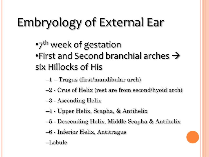 Embryology of External Ear