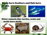 birds have feathers and fish have scales