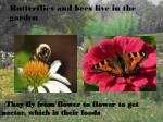 butterflies and bees live in the garden