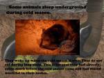 some animals sleep underground during cold season