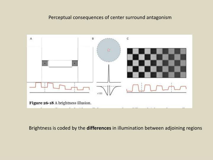 Perceptual consequences of center surround antagonism
