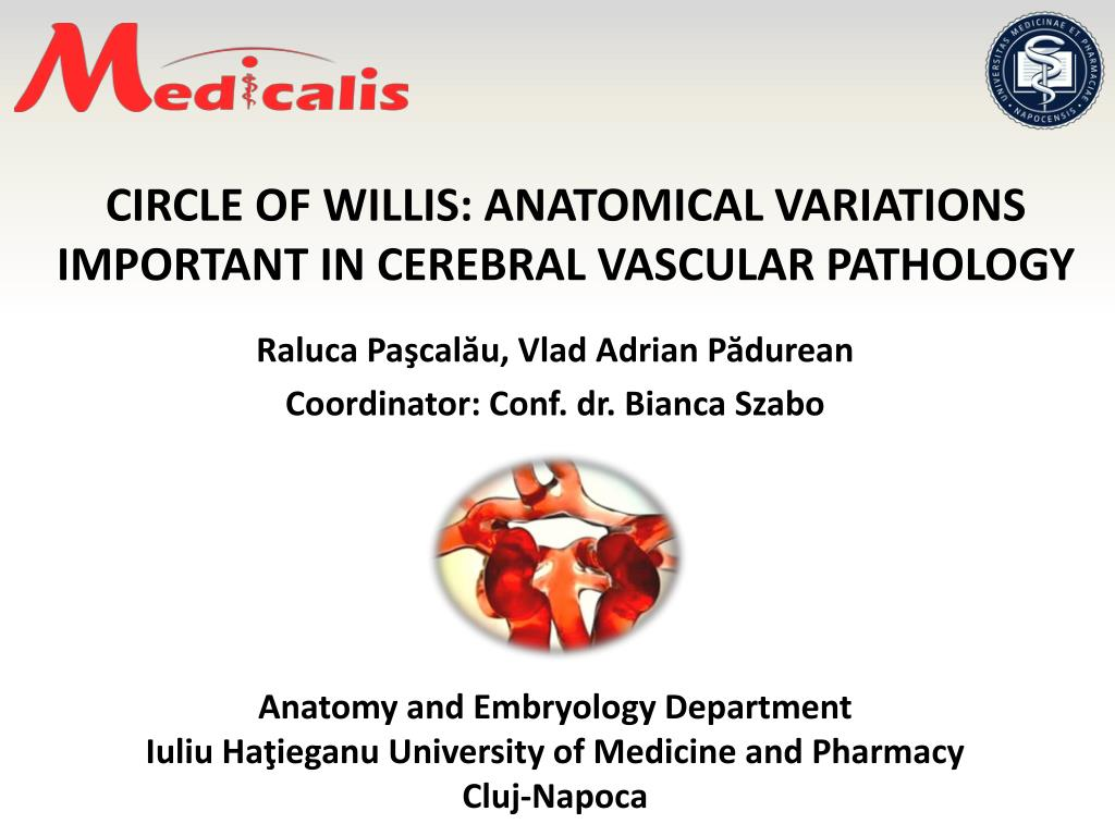 Ppt Circle Of Willis Anatomical Variations Important In Cerebral