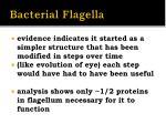 bacterial flagella1