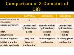 comparison of 3 domains of life