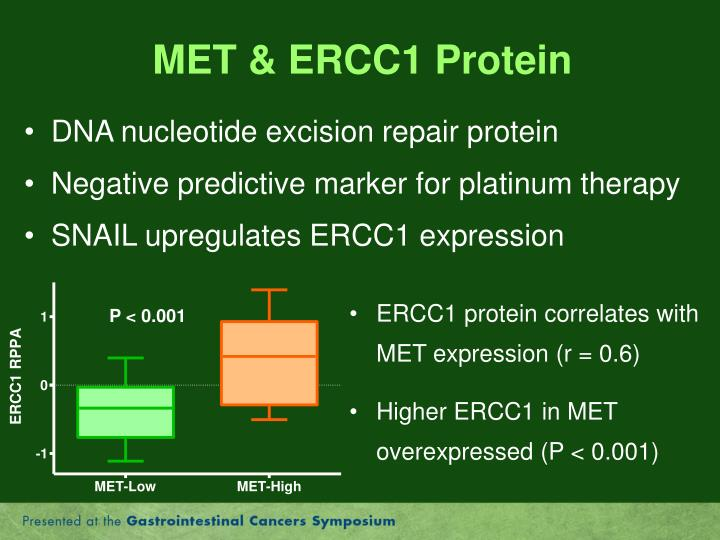 MET & ERCC1 Protein